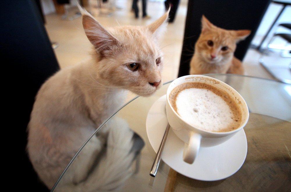 Bars - Le café des chats